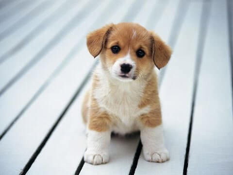 cute-dog-test-image-format-jpeg-compressed